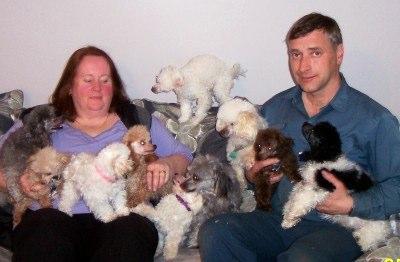 Welcome Poplar Lane Poodles